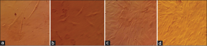 Figure 3: Human adipose-derived stem cells at different passages. (a) Passage 0, (b) Passage 1, (c) Passage 2 and (d) Passage 3