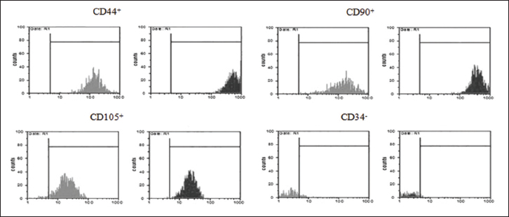 Figure 5: Expression of ADS cells specific markers (CD44, CD90, CD105) on primary culture of ADSCs by flow cytometry method. CD34 antibody was used as negative marker